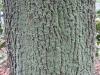 Baum-Rinde_Texturs_B_26820