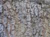 Baum-Rinde_Texturs_B_27230