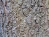 Baum-Rinde_Texturs_B_27240