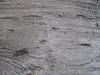 Baum-Rinde_Texturs_B_27290