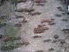 Baum-Rinde_Texturs_B_27460