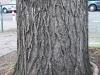 Baum-Rinde_Texturs_B_27660