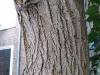 Baum-Rinde_Texturs_B_27690