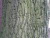 Baum-Rinde_Texturs_B_27960