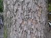 Baum-Rinde_Texturs_B_28000
