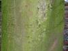 Baum-Rinde_Texturs_B_28050
