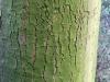 Baum-Rinde_Texturs_B_28060