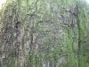 Baum-Rinde_Texturs_B_28120