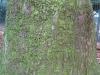 Baum-Rinde_Texturs_B_28130