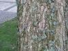 Baum-Rinde_Texturs_B_28620