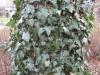 Baum-Rinde_Texturs_B_28670