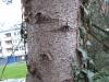 Baum-Rinde_Texturs_B_28730