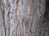 Baum-Rinde_Texturs_B_28740