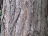 Baum-Rinde_Texturs_B_28750