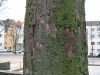 Baum-Rinde_Texturs_B_28880