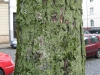 Baum-Rinde_Texturs_B_28900