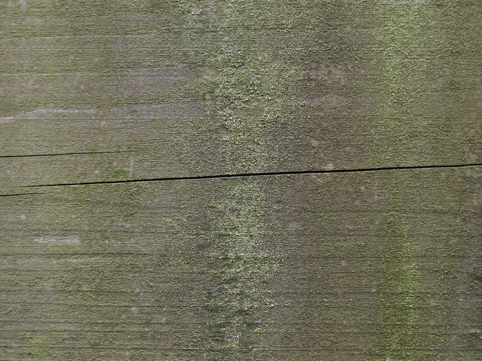 Holz_Textur_A_P2010343