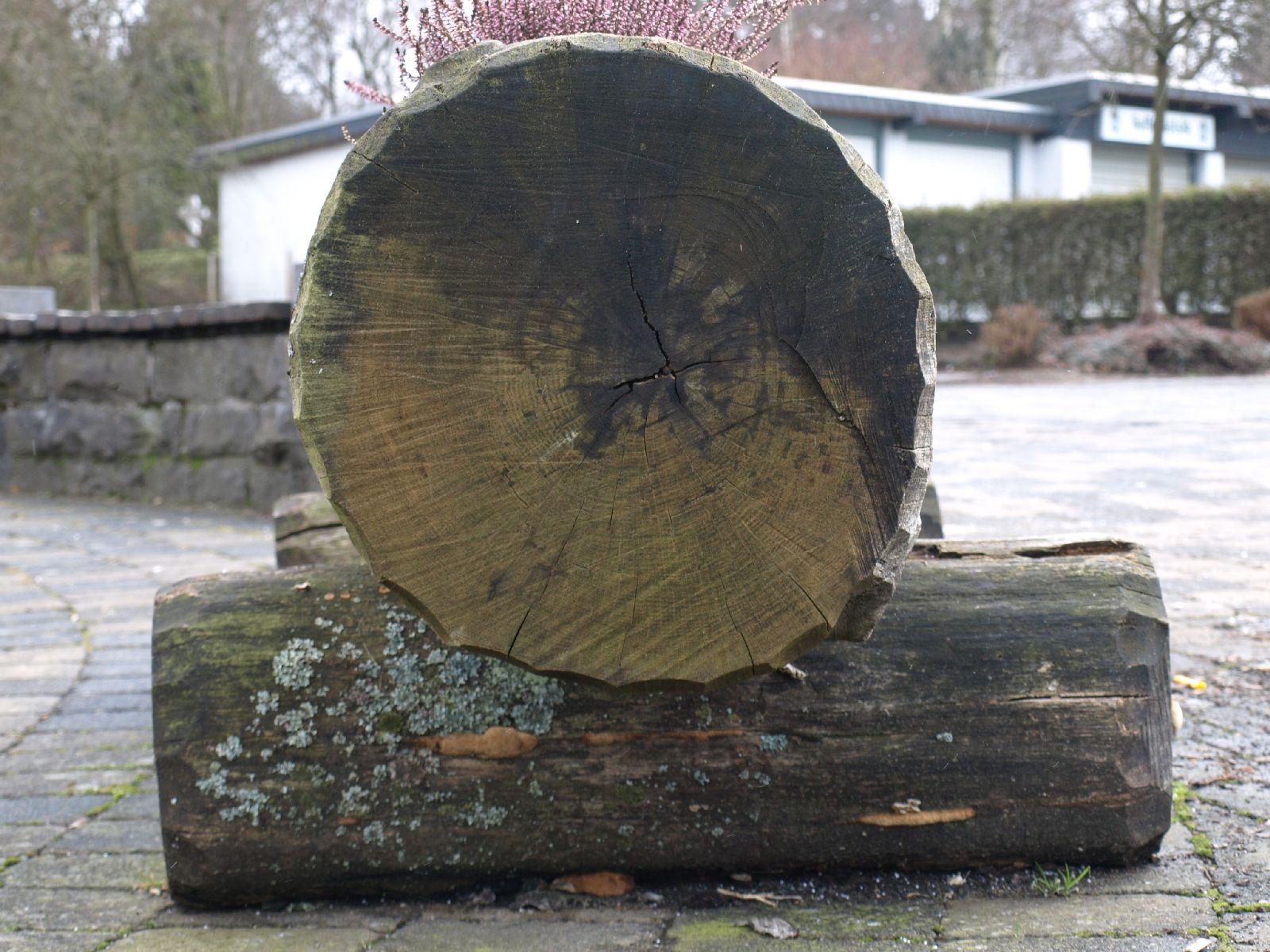 Holz_Textur_A_P2080565