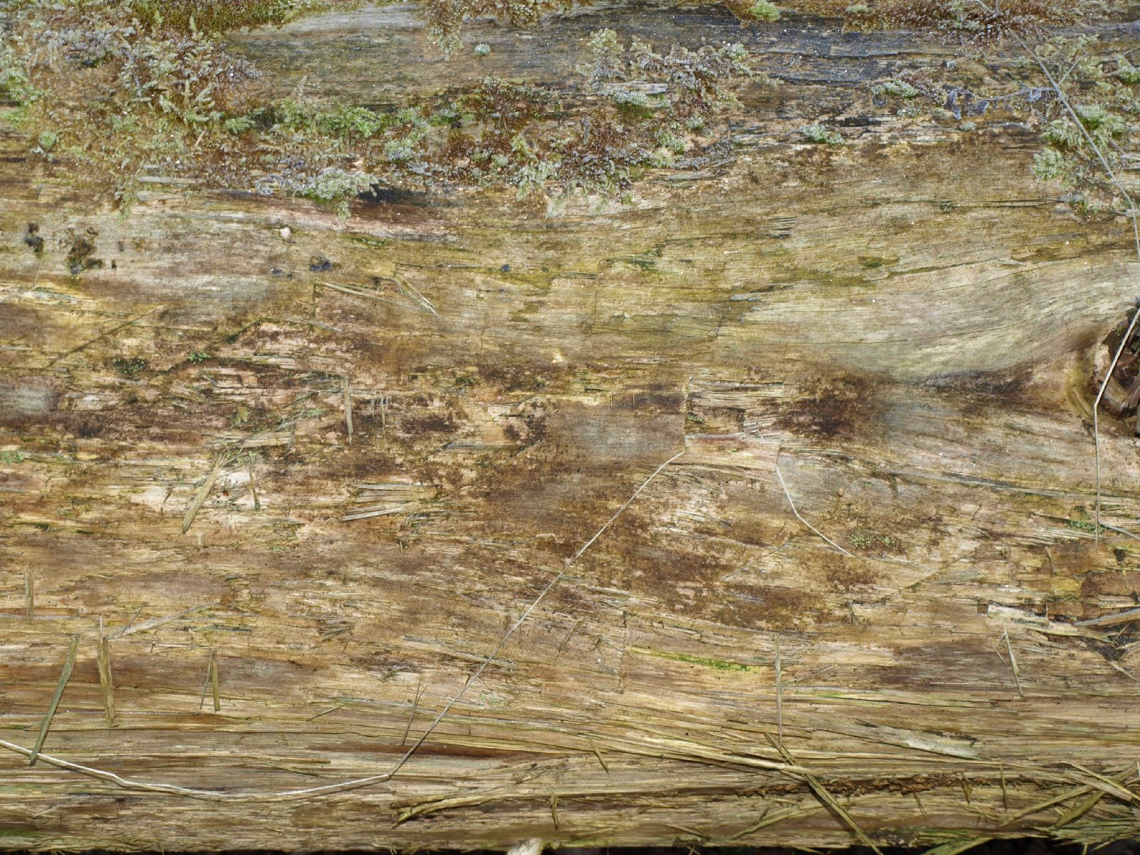 Holz_Textur_A_P4080192