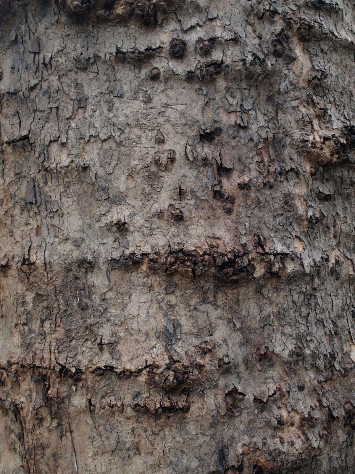 Holz_Textur_A_P4131168