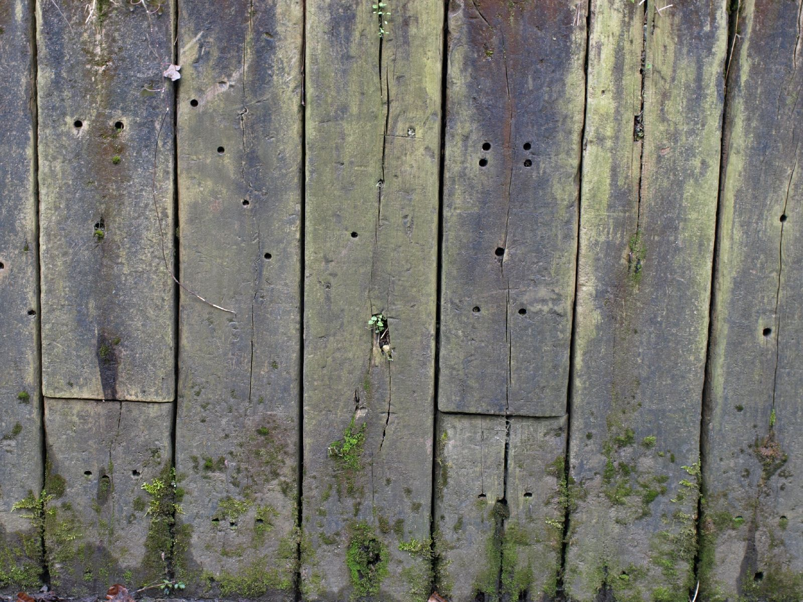 Holz_Textur_A_P4201431