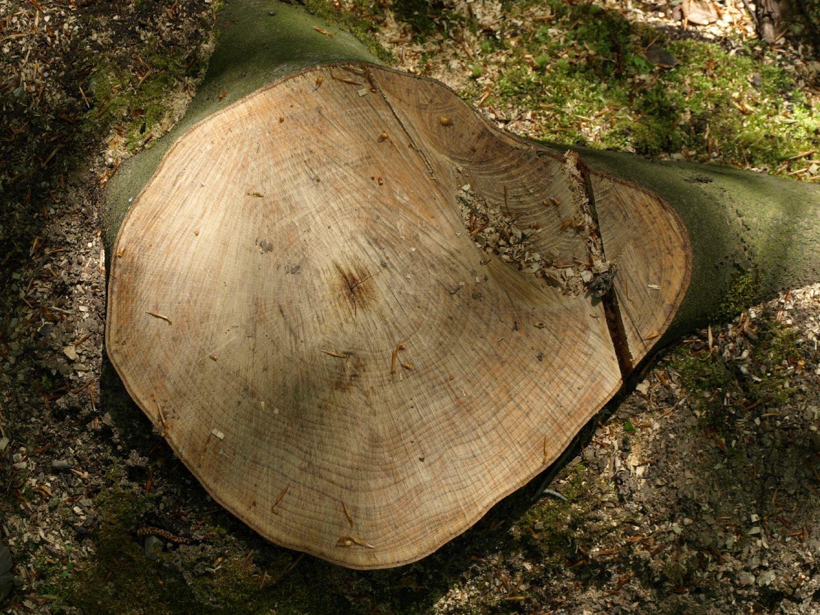 Holz_Textur_A_P5042454
