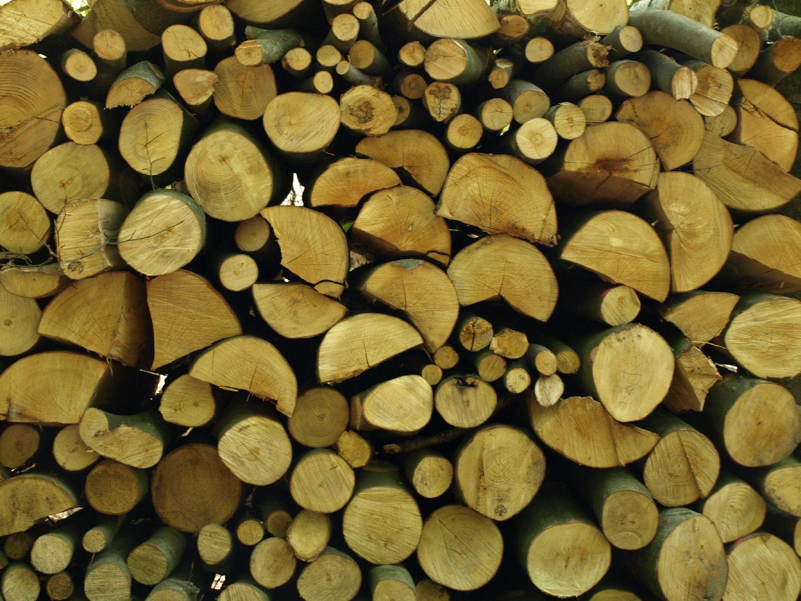 Holz_Textur_A_P5042458