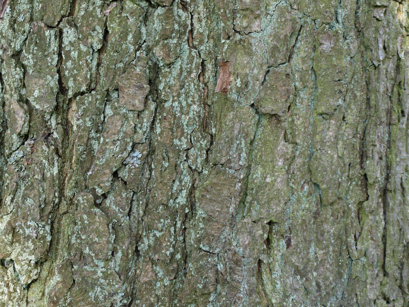 Holz_Textur_A_P5112636