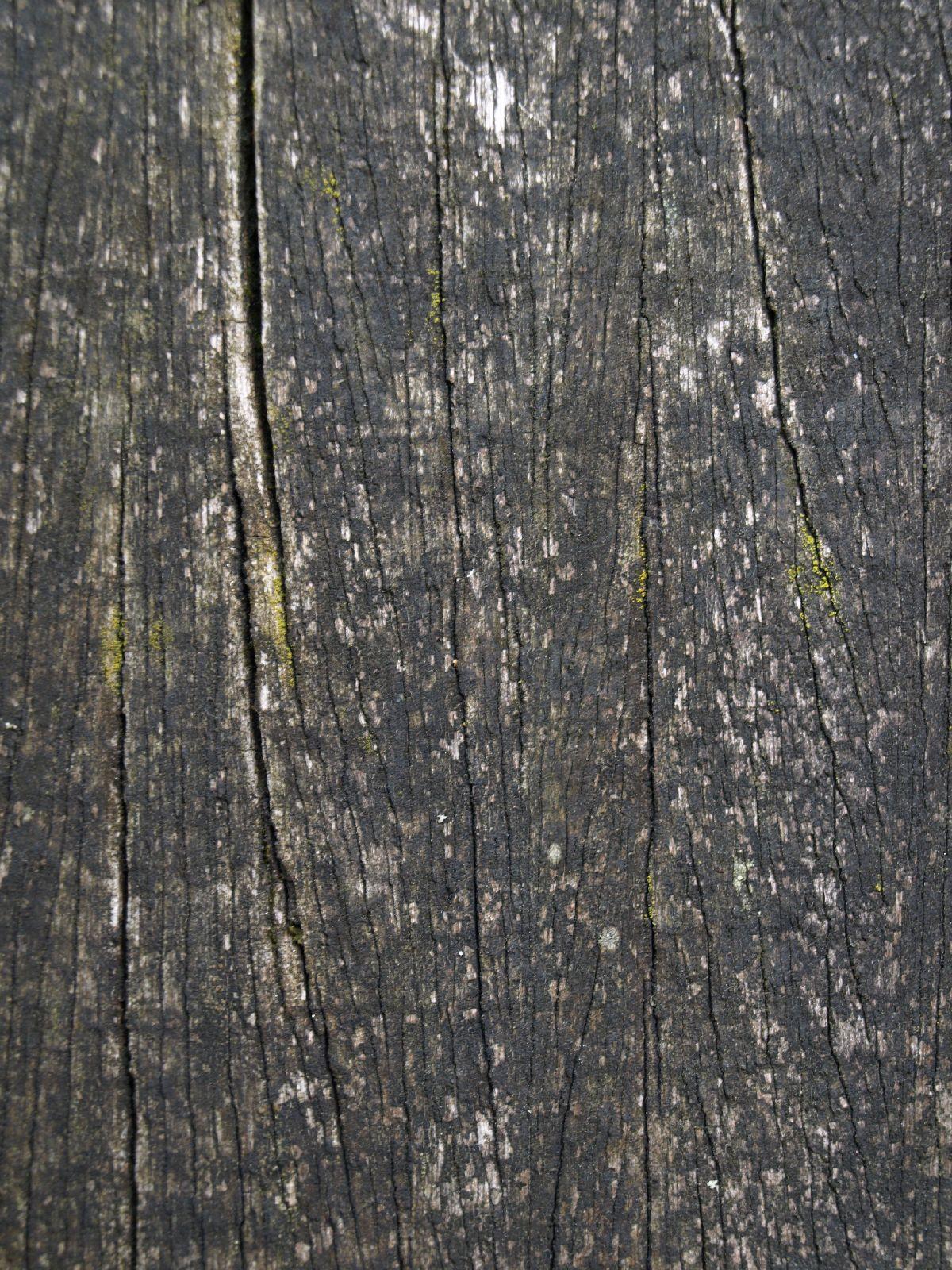 Holz_Textur_A_P5253065