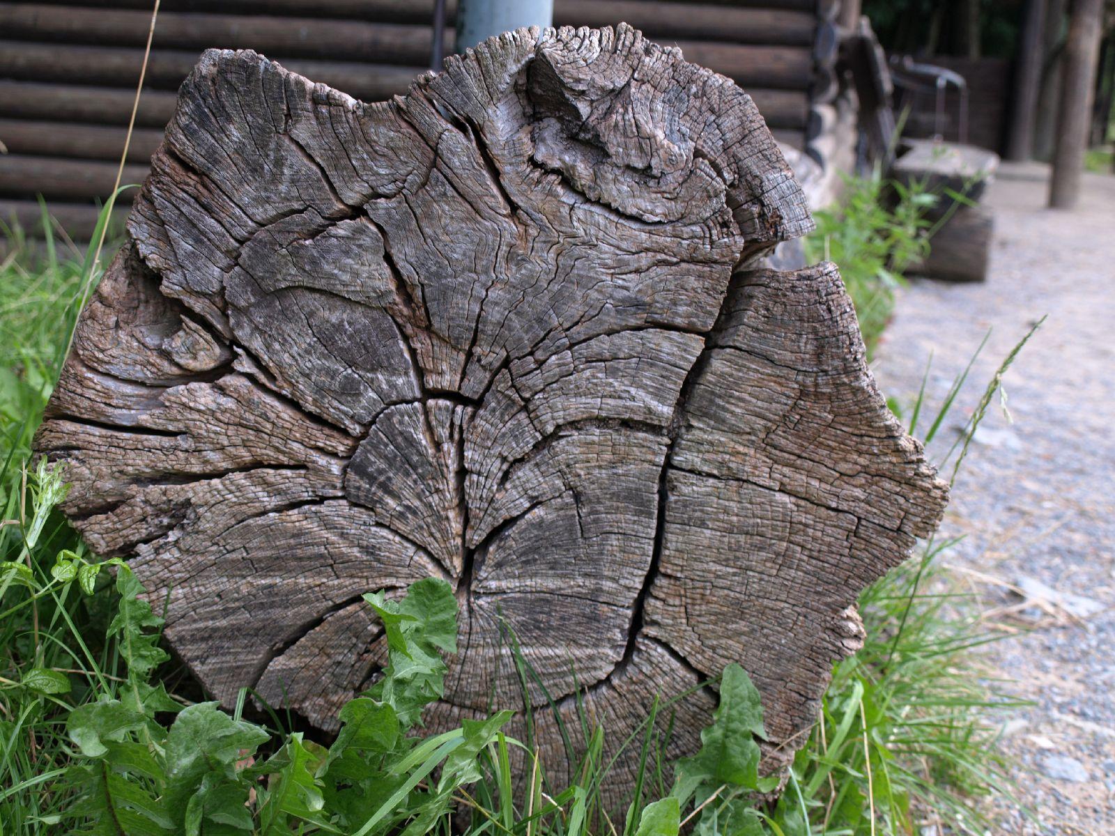 Holz_Textur_A_P8024113