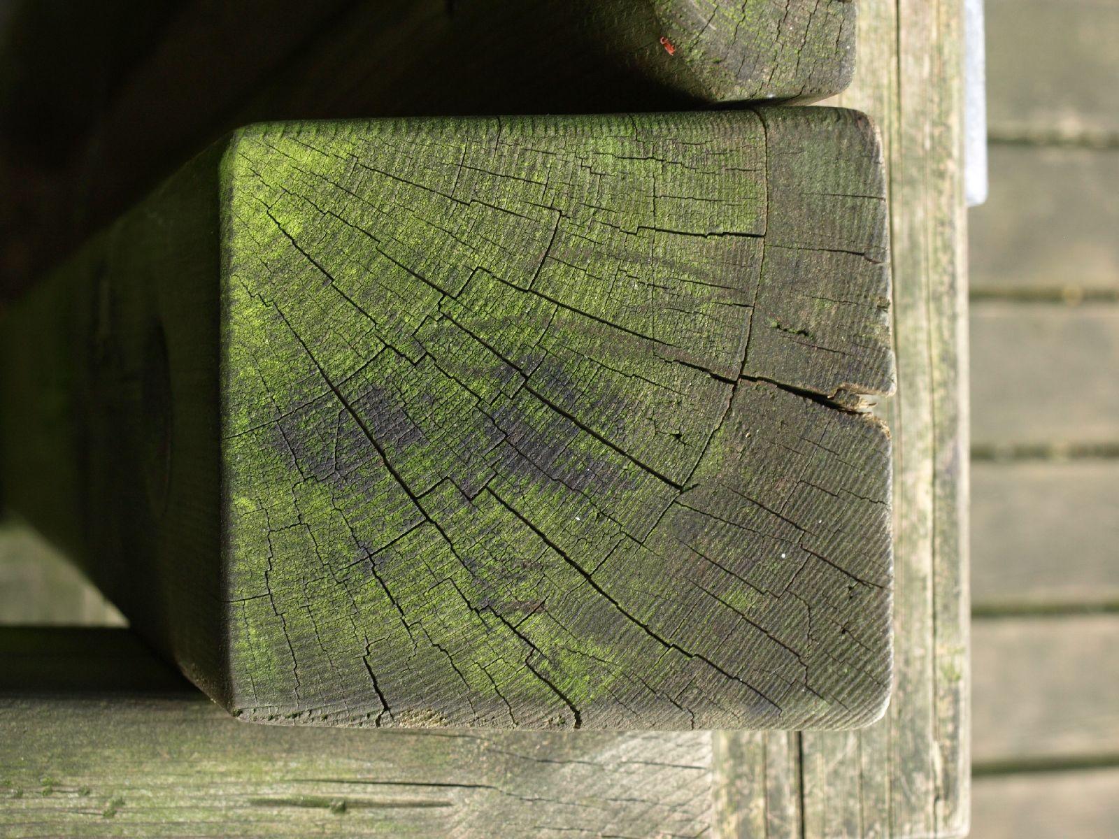 Holz_Textur_A_P9129624