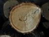 Holz_Textur_A_P5122722