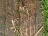 Holz_Textur_A_P9129618