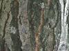 Holz_Textur_A_P9215394