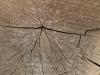 Holz_Textur_A_PA180265