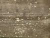 Holz_Textur_A_PA180279