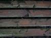 Holz_Textur_A_PC238038