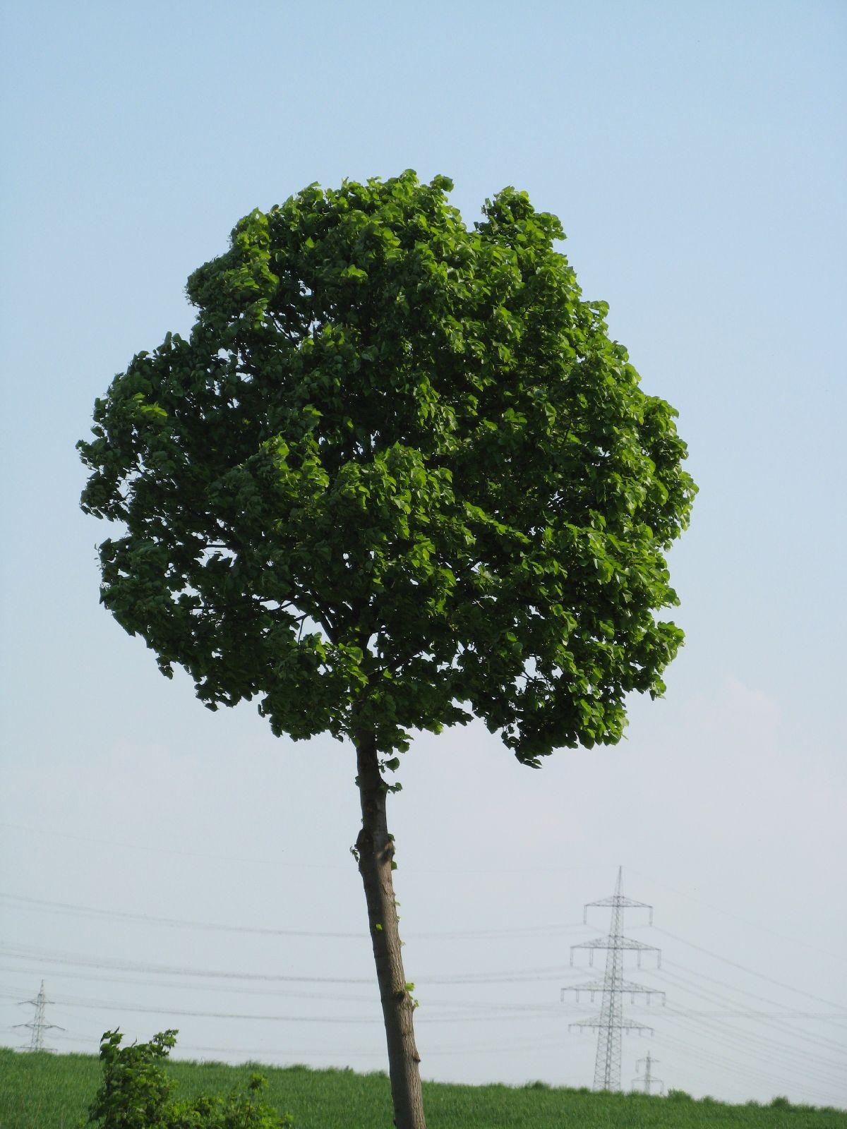 Pflanzen-Baum-Foto_Textur_B_00260