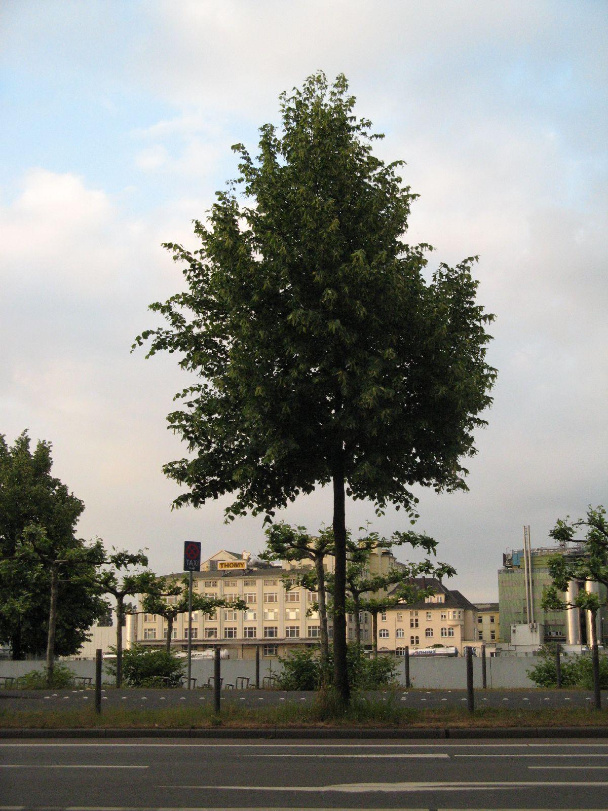 Pflanzen-Baum-Foto_Textur_B_01720