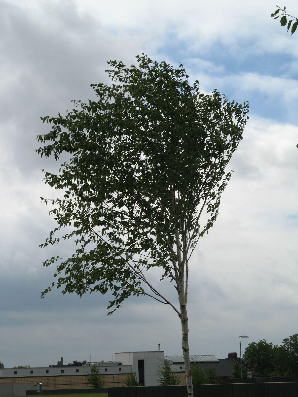 Pflanzen-Baum-Foto_Textur_B_01900