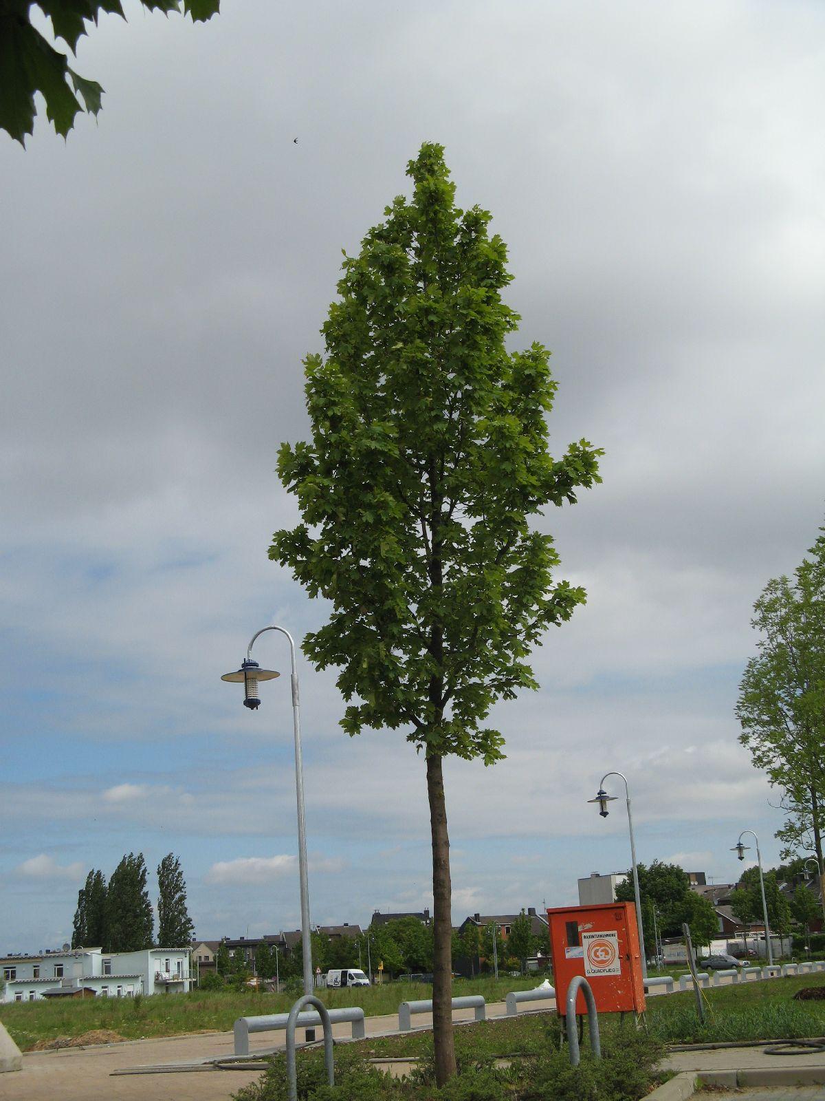 Pflanzen-Baum-Foto_Textur_B_01970