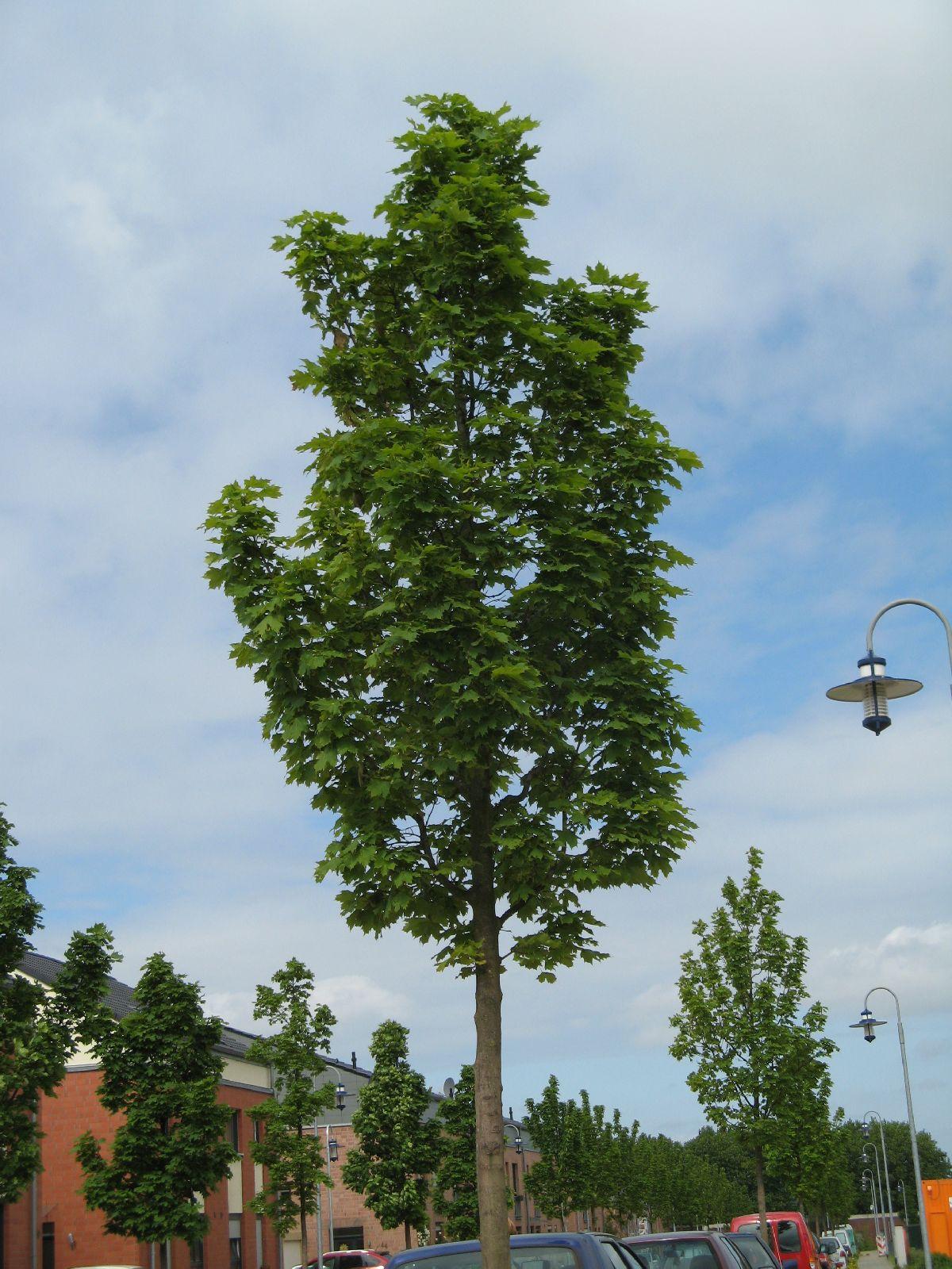 Pflanzen-Baum-Foto_Textur_B_02010