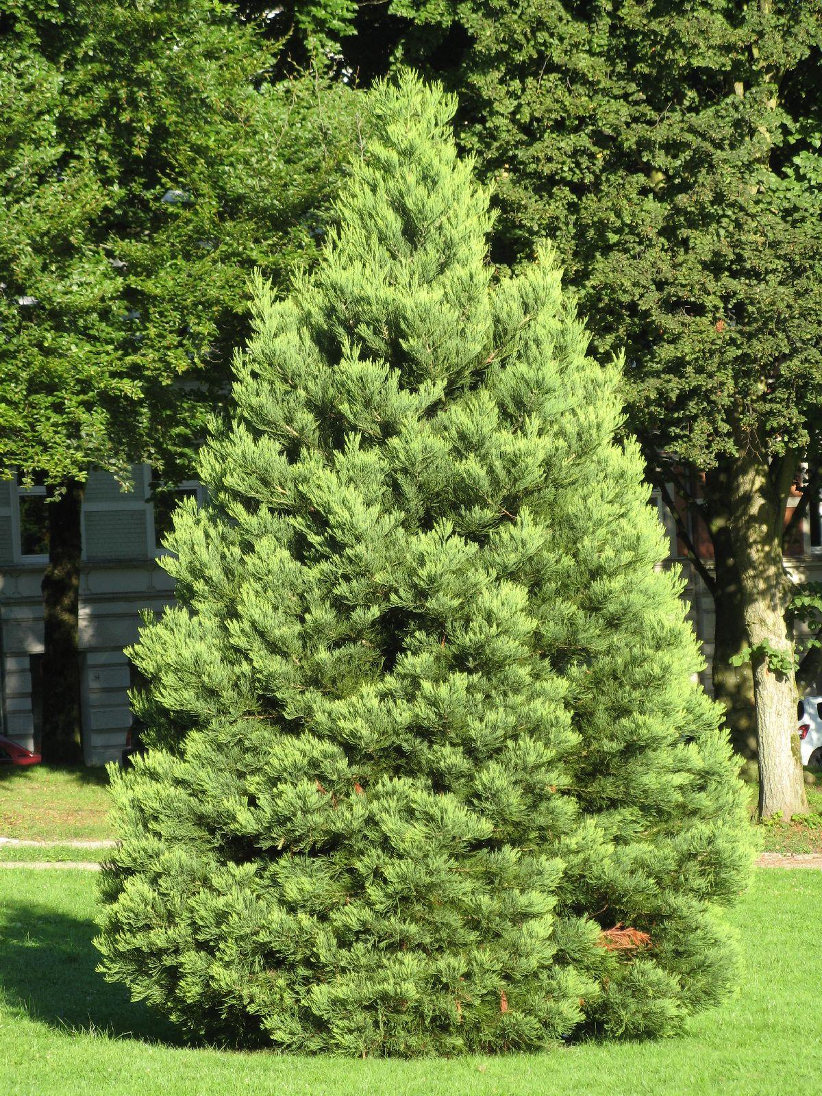 Pflanzen-Baum-Foto_Textur_B_0215