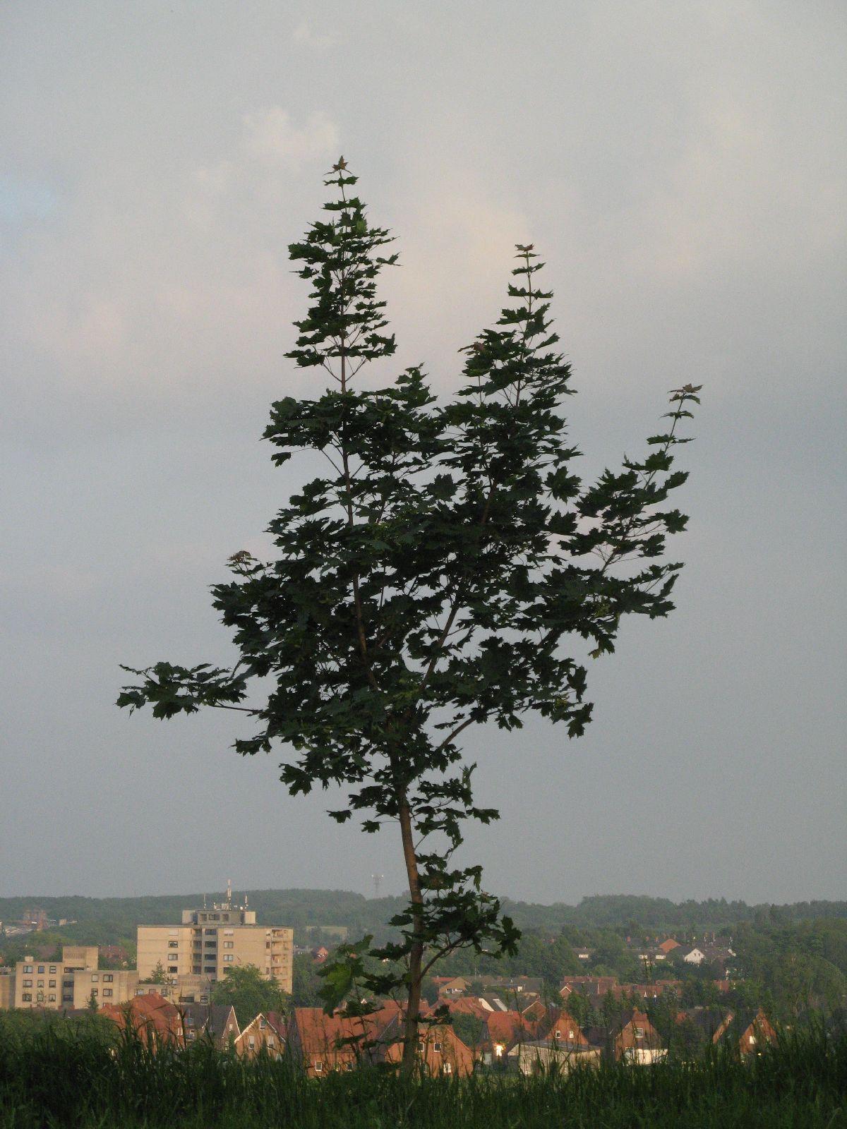 Pflanzen-Baum-Foto_Textur_B_03250