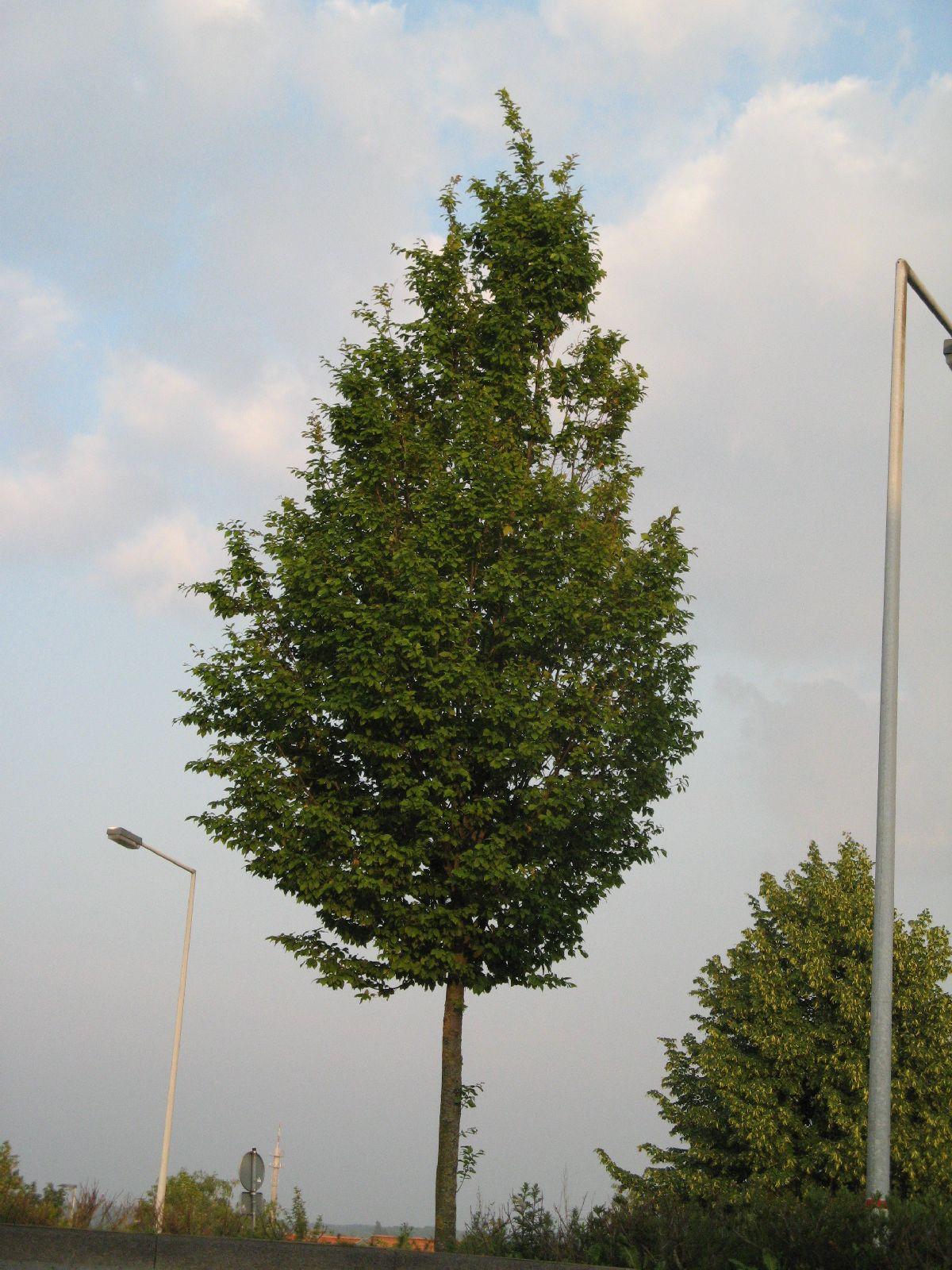 Pflanzen-Baum-Foto_Textur_B_03290