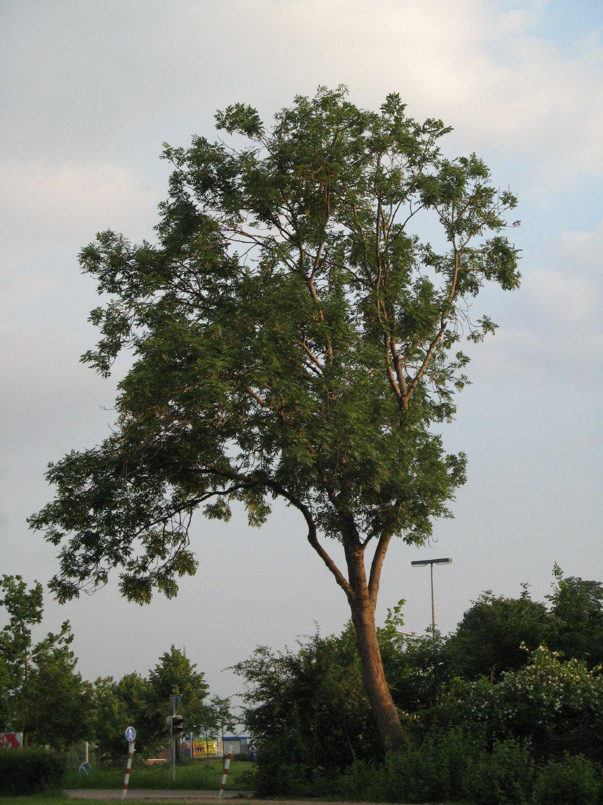 Pflanzen-Baum-Foto_Textur_B_03300