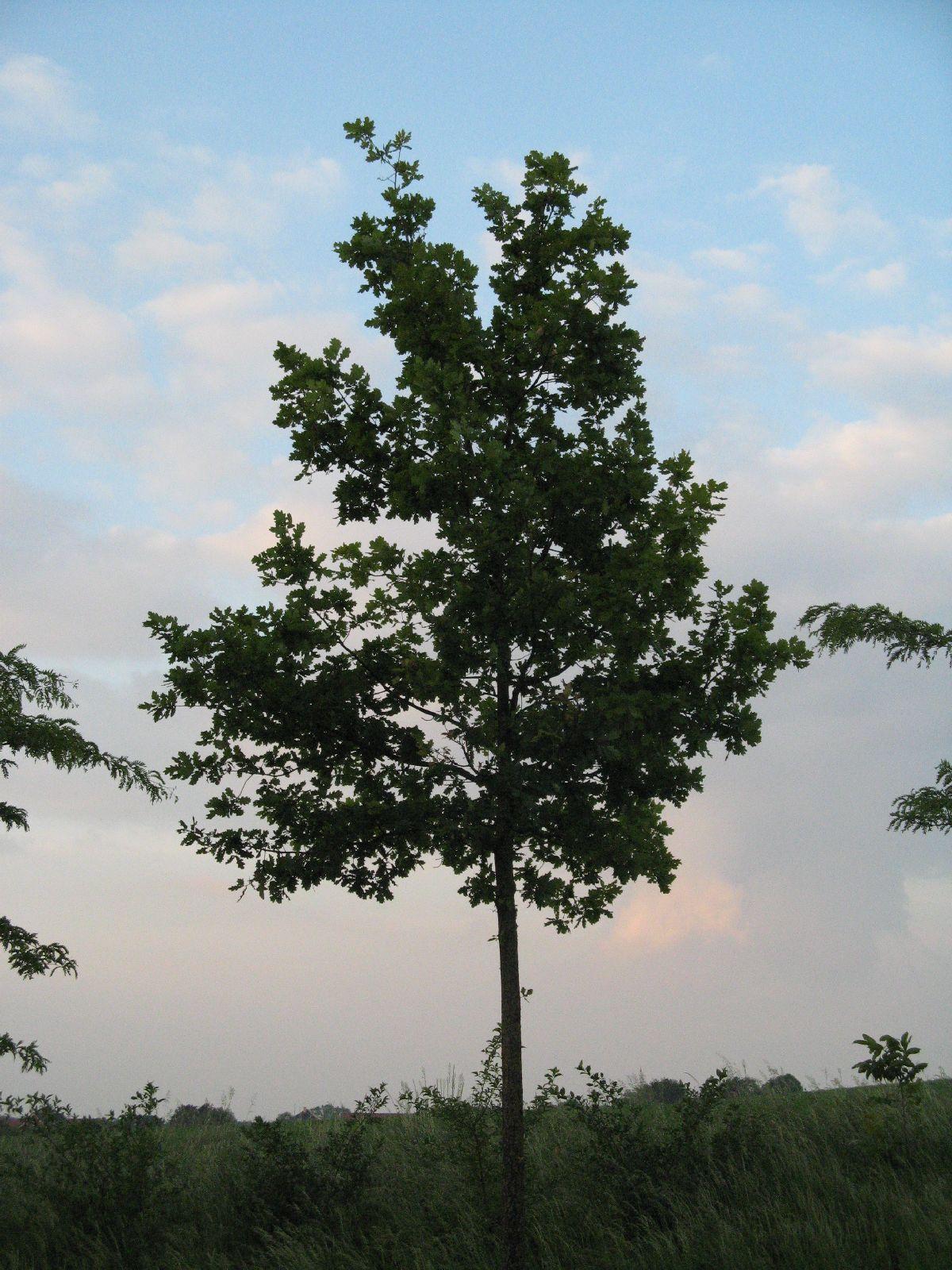 Pflanzen-Baum-Foto_Textur_B_03520