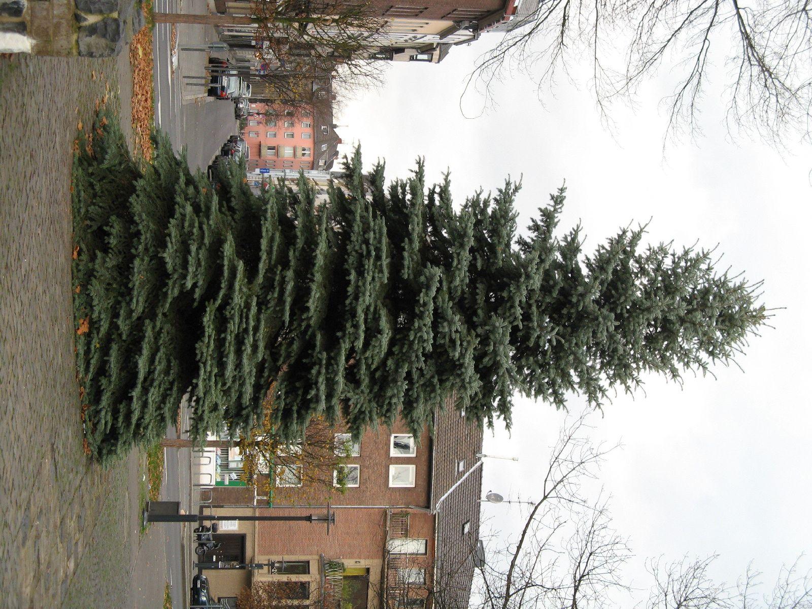 Pflanzen-Baum-Foto_Textur_B_09290