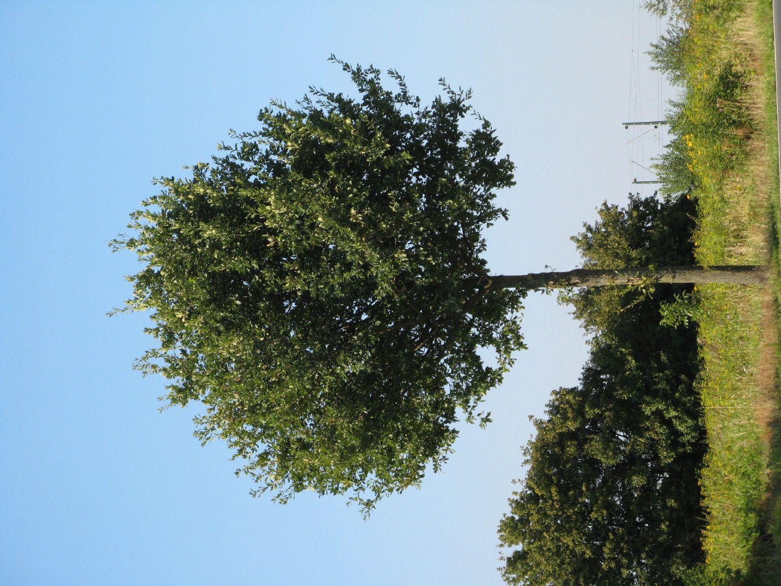 Pflanzen-Baum-Foto_Textur_B_1190