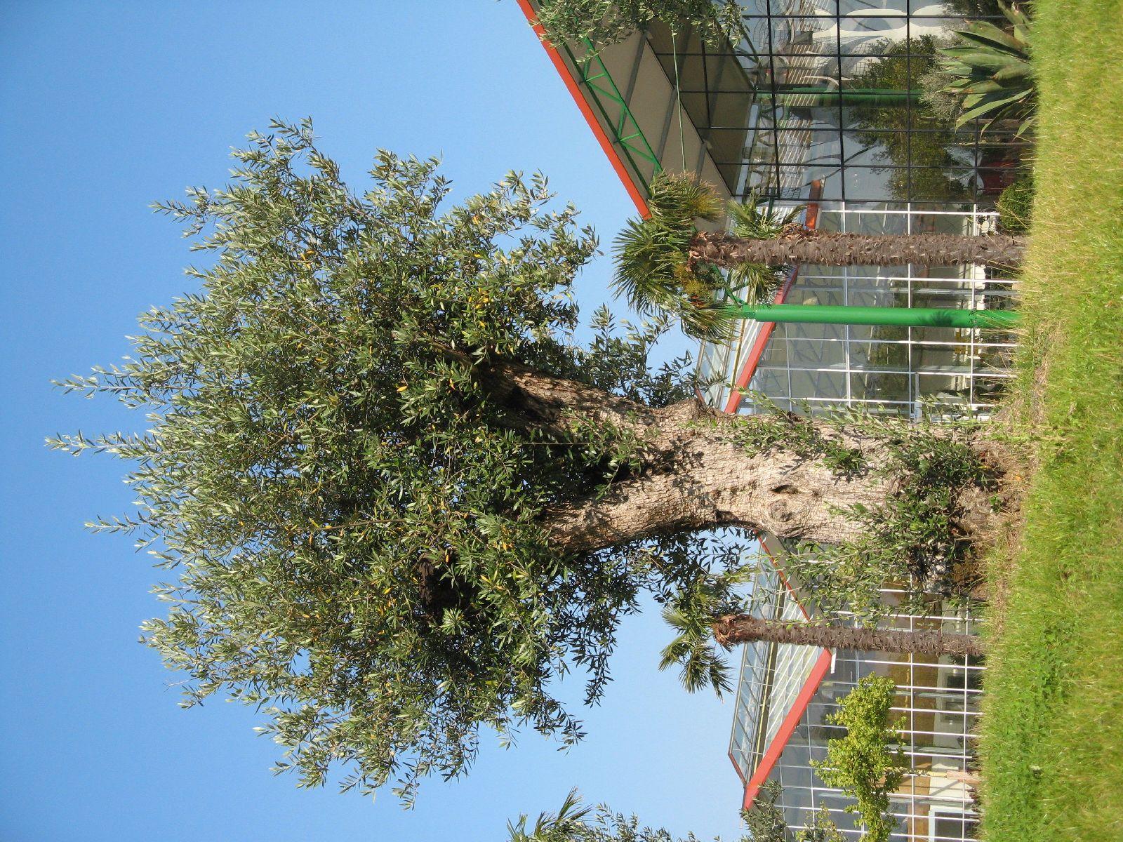 Pflanzen-Baum-Foto_Textur_B_1197